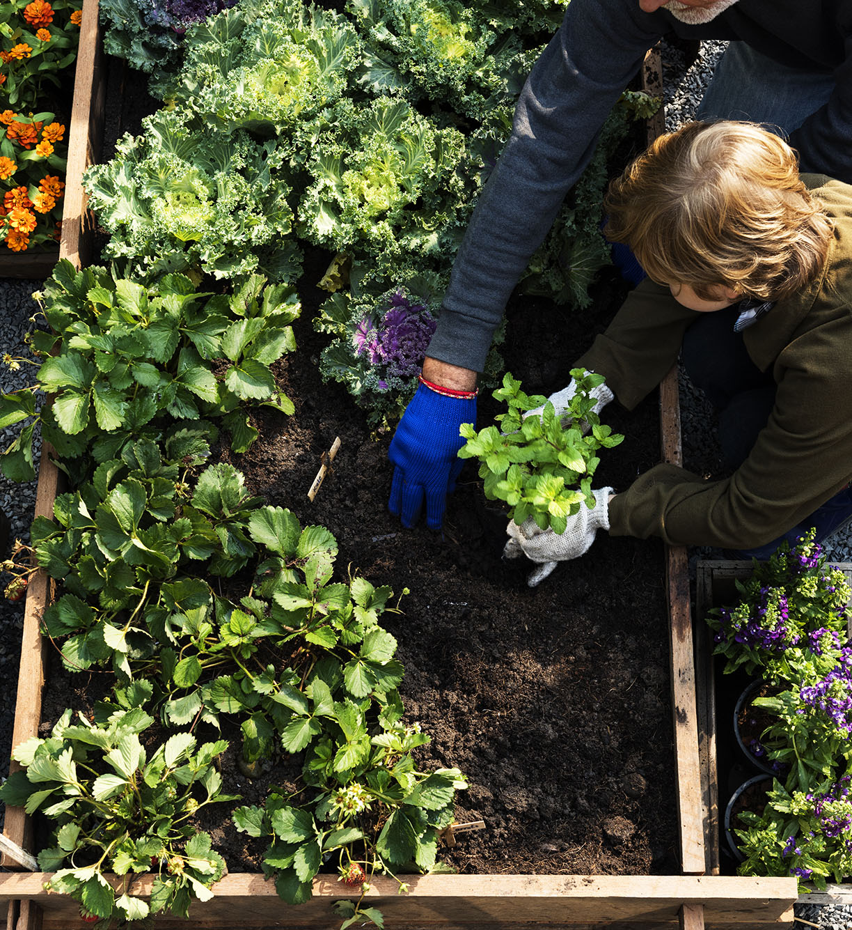 Centre Jardin Varennes Potager Legumes